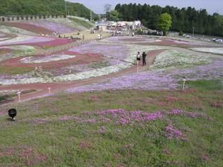 Sibazakura1