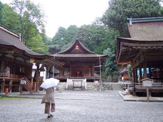 Hiyosi2