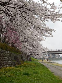 Saigawa1
